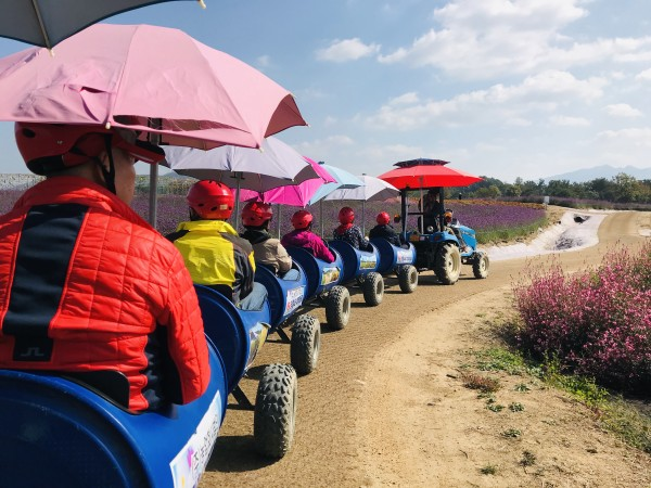 깡통열차를 탑승하여 꽃밭을 둘러보는 회원들 모습
